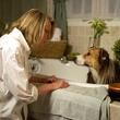 News_Darling Companion_Diane Keaton