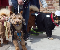 Easter Pet Parade on South Congress 2014 Tonto Lone Ranger