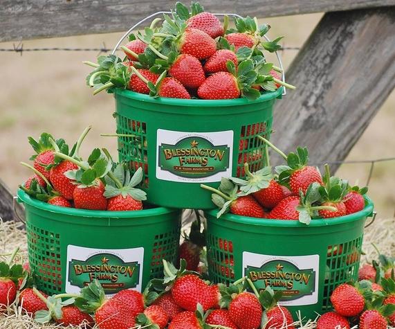 Blessington Farms Strawberries