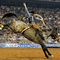 Rodeo Houston cowboy riding a bucking horse