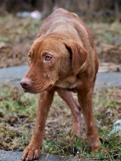 Forgotten Dogs, stray dogs, January 2013