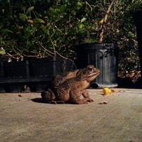 Photo of toad