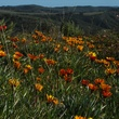 Stephan Lorenz Channel Islands January 2014 Winter and spring can bring a profusion of wildflowers on the Channel Islands