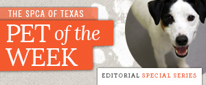 DTX Pet of the Week